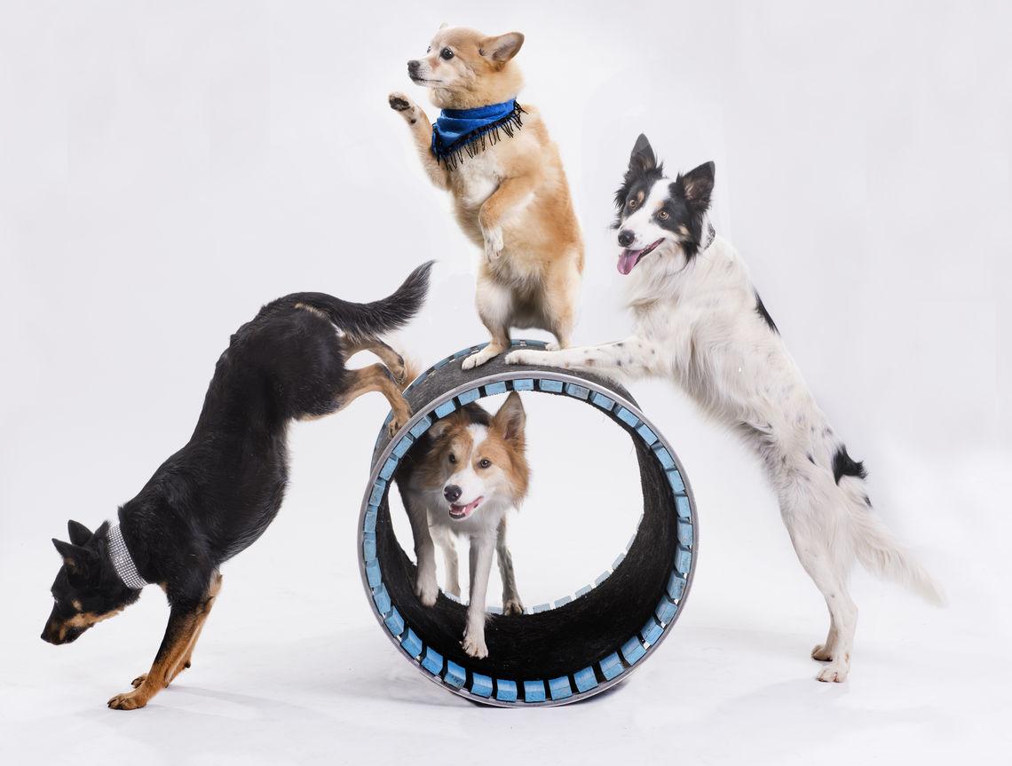 4 dog barrel