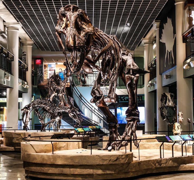 dinosaur hall 2017 3
