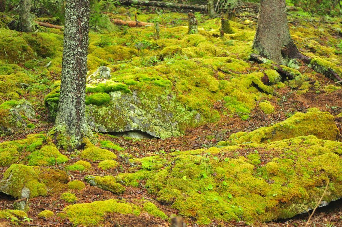 Phillyfunguide Moss Gardening