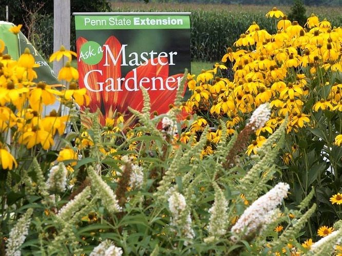 gardening help desk 500